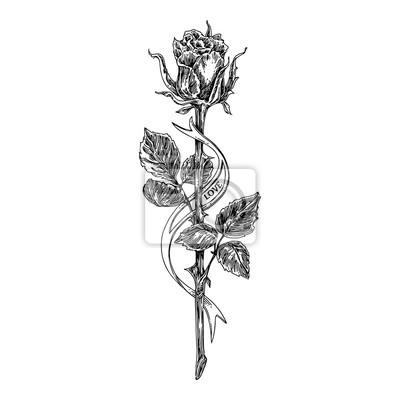 Fototapeta Szkic Tatuaż Rose Na Długiej łodydze I Wstążki Czarny I Biały