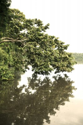 Fototapeta Tambopata Prowincja Zewnątrz