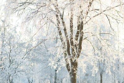 Fototapeta Tapety z matowego drzewa gałęzie drzewa na zimowe dni