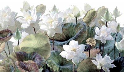 Fototapeta The scenic Lotus flowers.