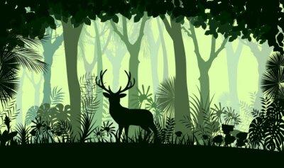 Fototapeta tła lasu z drzew dzikich jeleni