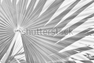 Fototapeta tło tekstury, abstrakcyjny pasiasty charakter, czarno-biały dźwięk