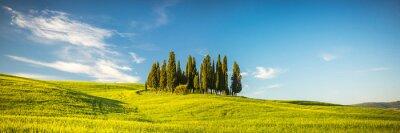 Fototapeta Toskania na wiosnę