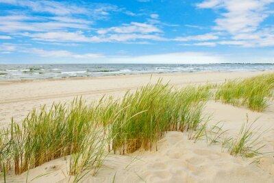 Fototapeta Trawa wydmowy piasek z widokiem na morze plaża, Sobieszewo Bałtyk, Polska