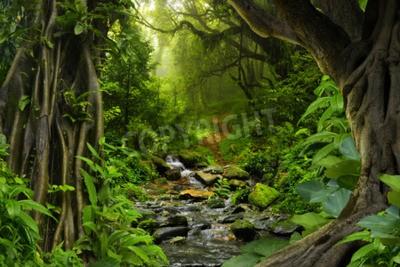 Fototapeta Tropikalna dżungla z rzeką