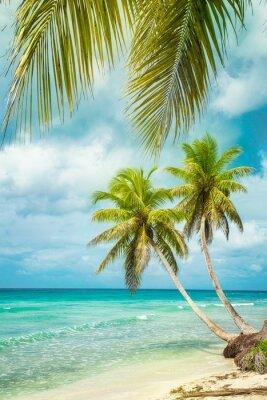Fototapeta tropikalna plaża z palmy kokosowej