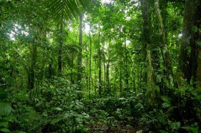 Fototapeta Tropikalne lasy deszczowe krajobrazu, Amazon