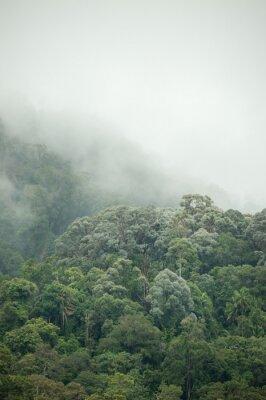 Fototapeta tropikalne lasy deszczowe w Hala-Bala Wildlife Sanctuary Tajlandii