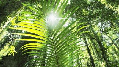 Fototapeta tropikalnych