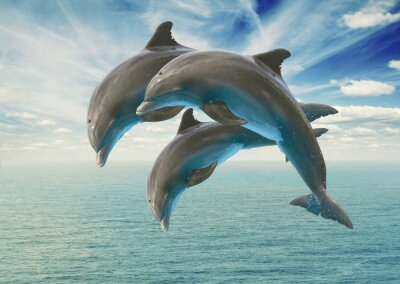 Fototapeta trzy skoki delfiny