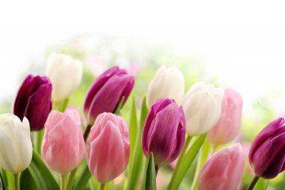 Fototapeta Tulipany