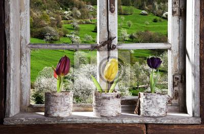 Fototapeta Tulipany przy oknie, patrząc na krajobraz
