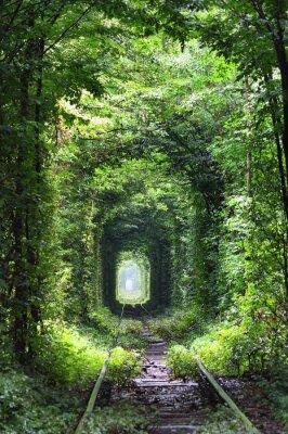 Fototapeta Tunel miłości