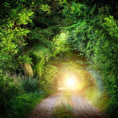 Fototapeta Tunnel aus Bäumen führt ins Licht