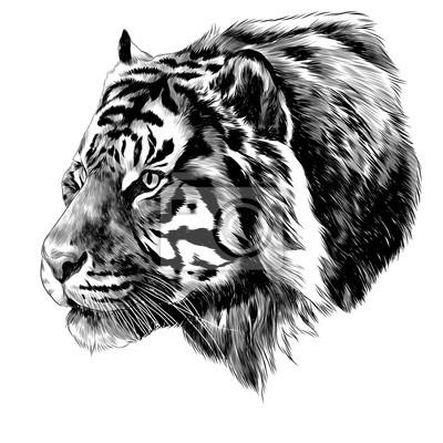 Fototapeta Tygrys Głowa Szkic Grafiki Wektorowej Czarno Białe Monochromatyczne