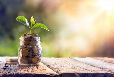Fototapeta Uprawa roślin w monetach Oszczędnościowych - Inwestycje i odsetek Concept