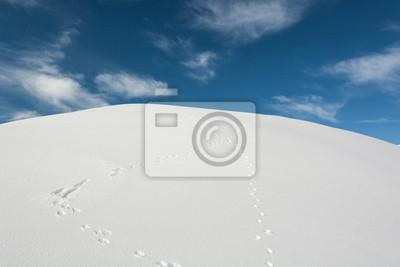 Fototapeta Utworów królik w śniegu
