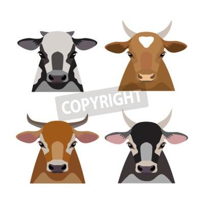 Fototapeta Vector Krowa Byk Zwierzęta Gospodarstwa Zestaw Płaska Kreskówka