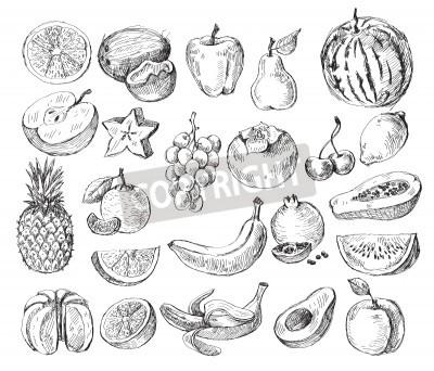 Fototapeta vector set of different hand drawn fruit