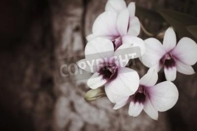 Fototapeta Vintage orchidea kwiaty