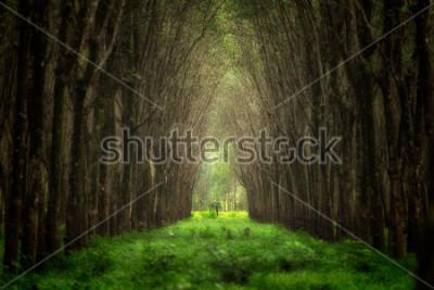 Fototapeta Vyimaginovany tunel drzewa. Piękna lasowa fantazja.