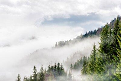 Fototapeta wälder