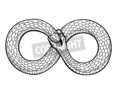 Fototapeta Wąż Zwinięty W Pierścień Nieskończoność Ouroboros Pożerający