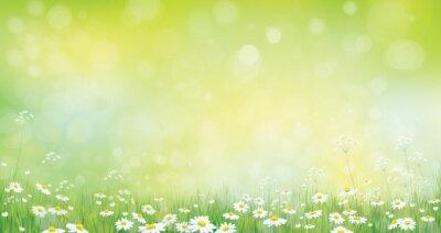 Fototapeta Wektor charakter tła, granicy zielonej trawy i chamomiles.