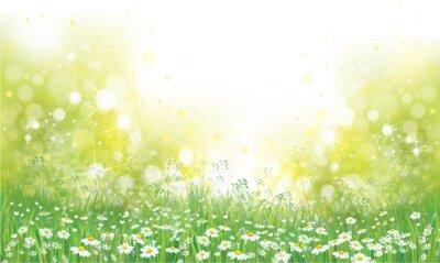 Fototapeta Wektor latem charakter tła, pola kwitnących kwiatów.