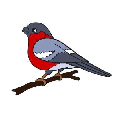 Wektor Rysunek Ptak Gil Fototapeta Fototapety Gil ćwierkanie