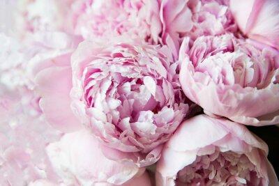 Fototapeta White and pink peonies. Background, wallpaper..