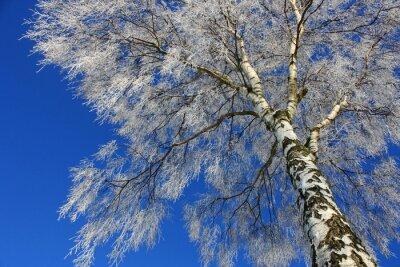 Fototapeta Widok nieba zimowego