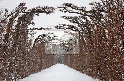 Fototapeta Wiedeń - na żywo płot od ogrodów pałacu Schönbrunn w zimie
