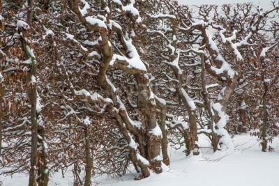 Fototapeta Wiedeń - stary płot na żywo z ogrodów pałacu w zimie schonbrun