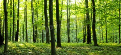 Fototapeta Wiejska droga przez las pełen drzew.