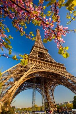 Fototapeta Wieża Eiffla w czasie wiosny w Paryżu, Francja