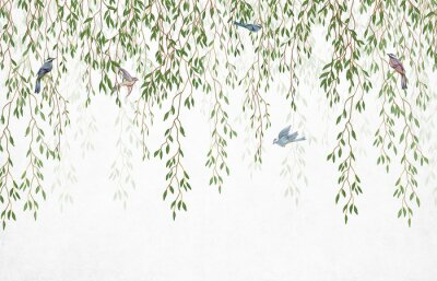 Fototapeta Willow branches hanging from above with birds on a white background. Wallpaper, murals and wall paintings for interior printing.