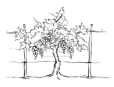 Winnica Winogron Na Kraty Ilustracji Wektorowych Grafiki