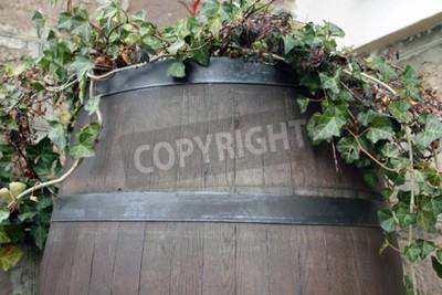 Fototapeta Winorośl rośnie z beczki ciemnego drewna
