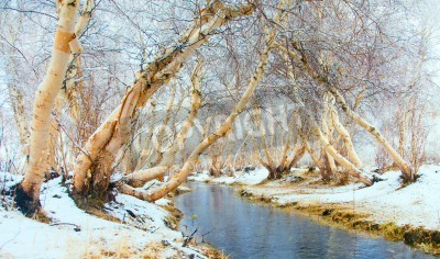 Fototapeta Winter landscape. The river is not covered by ice in the woods