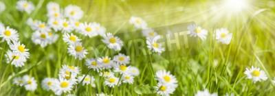 Fototapeta Wiosenna łąka z pięknymi kwiatami i promieniami słońca w tle