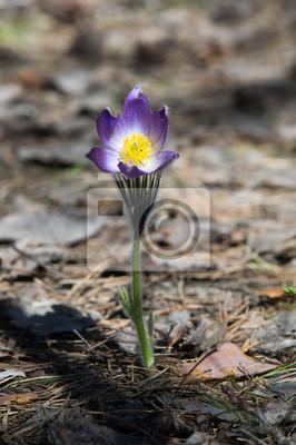 Wiosna Krajobraz Kwiaty Rosnące Na Wolności Wiosenny Kwiat