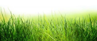 Fototapeta wiosna łąka
