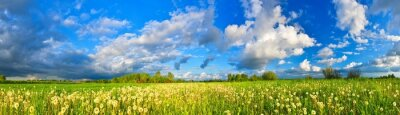 Fototapeta Wiosna łąka panorama, pełna mniszek