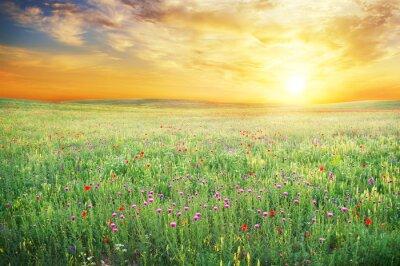 Fototapeta Wiosną łąki