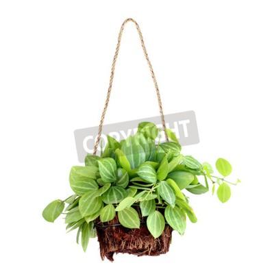 Fototapeta wisi kosz roślin na białym tle