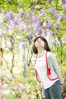 Fototapeta Wisteria floribunda z ładny kolor i tło