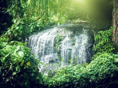 Fototapeta wodospad w dżungli Seszele, Mahe Island