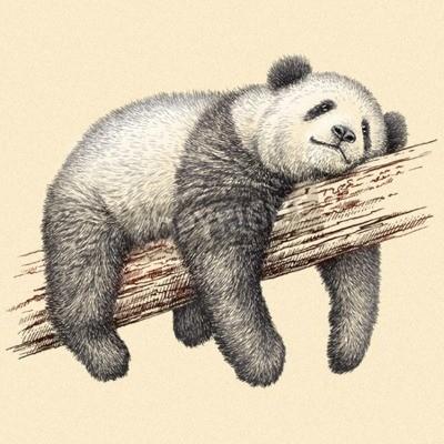 Fototapeta wygrawerować odizolowane Panda Bear ilustracja szkic. Art liniowa