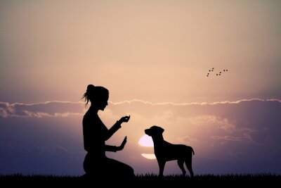 Fototapeta wyszkolony pies o zachodzie słońca